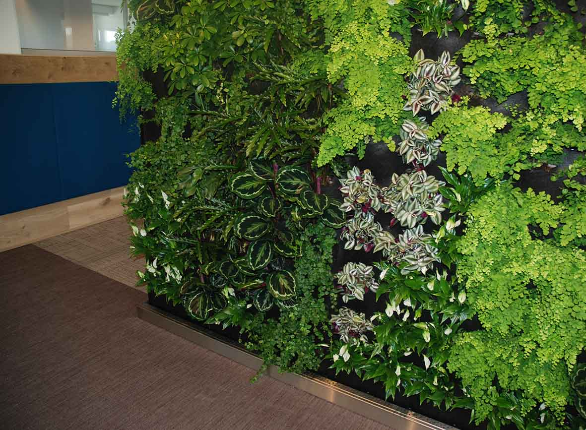 Plantenwanden IntecSea